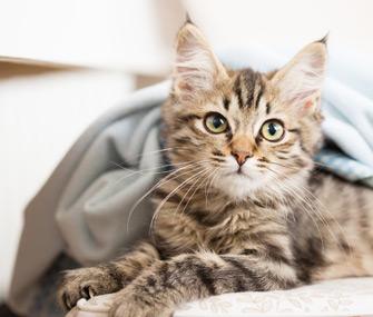 Yavru Kediniz Neden Yatakta Uyumamalı