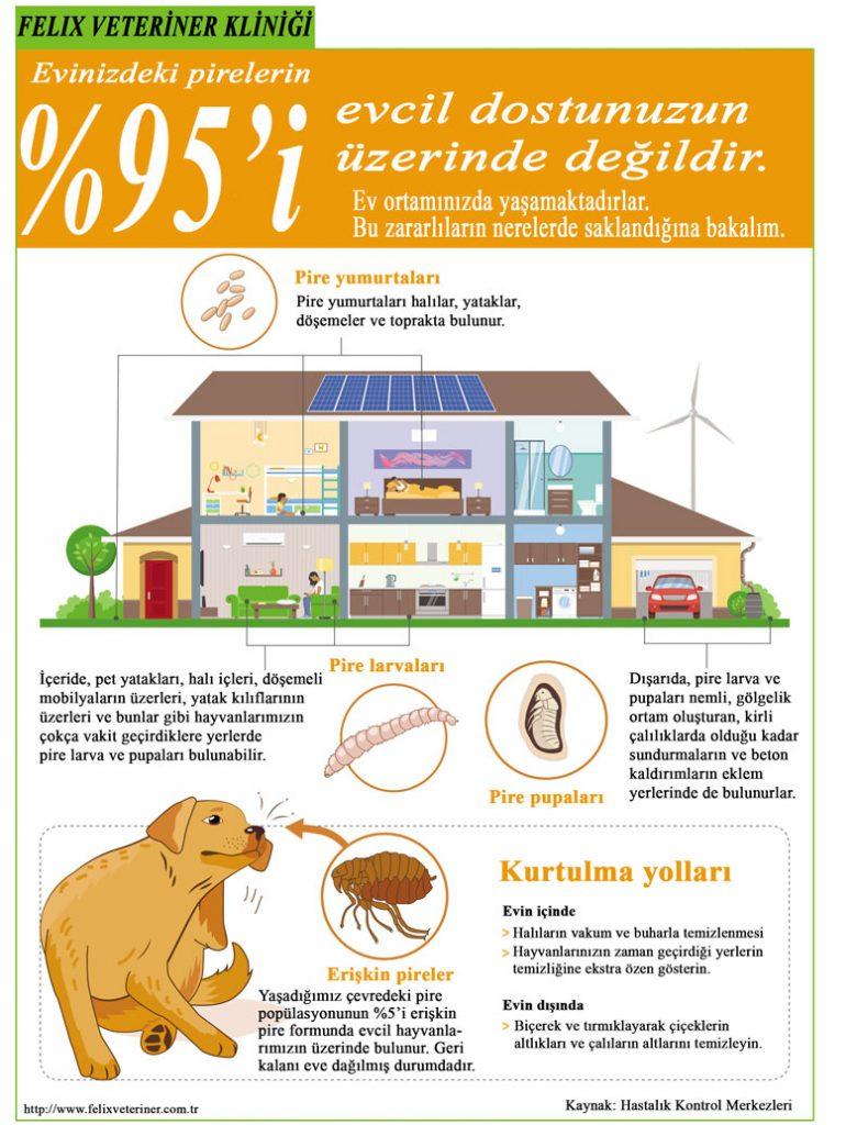 veterinary-handout-fleas-